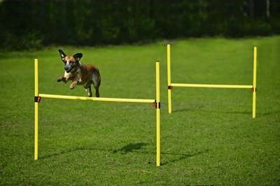 Dog Agility Training Equipment - JUMP