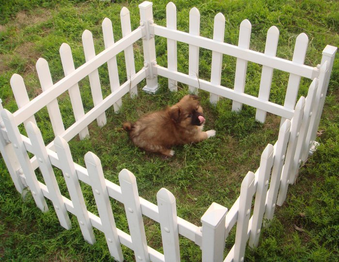 Exceptional Plastic Dog Puppy Garden Fence