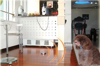 Electric Dog Fence | Electronic Dog Fences | Invisible Dog Fence